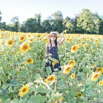 Chasing Sunflower Fields in Daisy Drop-Waist Dress