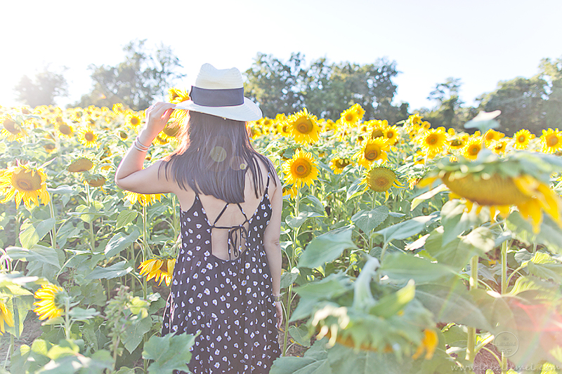 LaBelleMel_Sunflower_Fields_Casual_Daisy_Dress_5
